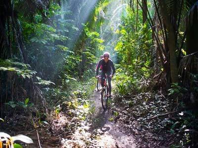 Bicycle In The Jungle