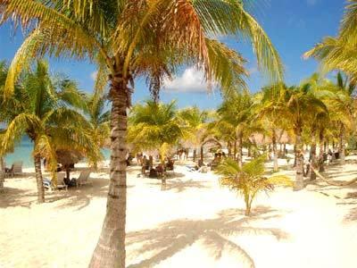 Club de Playa - Palmeras