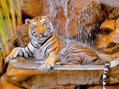 Golf - Tigre