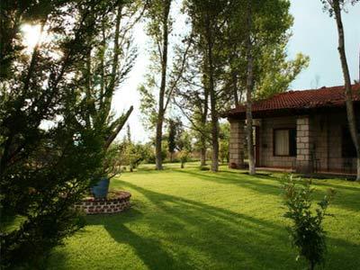 Jardín - Árboles