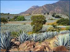 Tour Privado a la Tierra del Tequila