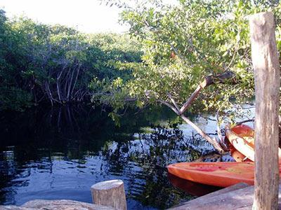 Special Features - Cenote