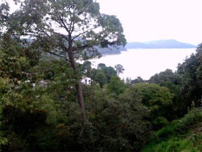 Vista al Bosque y Lago